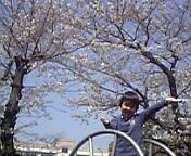 桜の下で釣り?